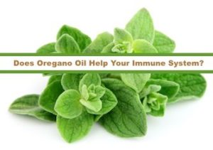 does-oregano-oil-help-your-immune-system