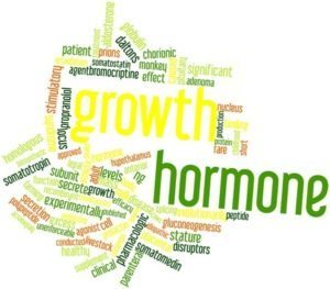 How Growth Hormone Works